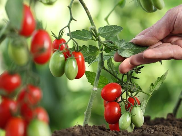 トマトイメージ
